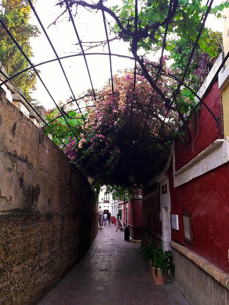 Calle Agua. Barrio de Santa Cruz. Sevilla.  #barriosantacruz #sevilla #turismosevilla #walkingtours #andaluciatours #andalusiaguidedtours