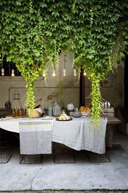 Nouer les lianes de vigne vierge comme des rideaux <3