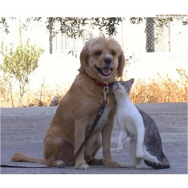 Cat and dog!