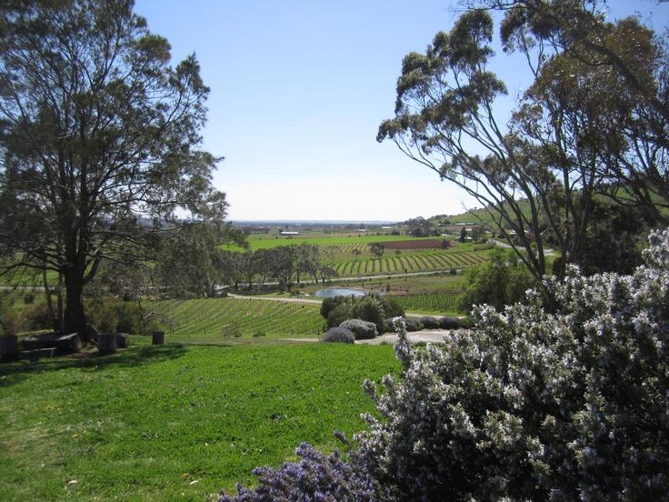 Overlooking the Barossa Valley.