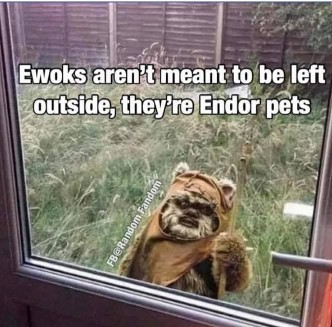 Pin By Jacen Solo On Star Wars Funny Memes Star Wars Humor Memes