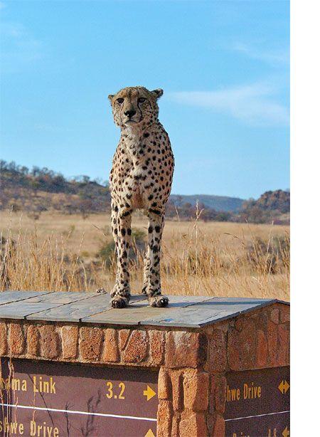 The Pilanesberg Nature Reserve.