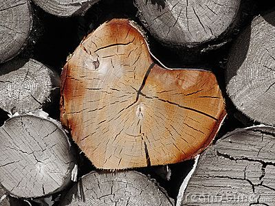 how to cut your own firewood