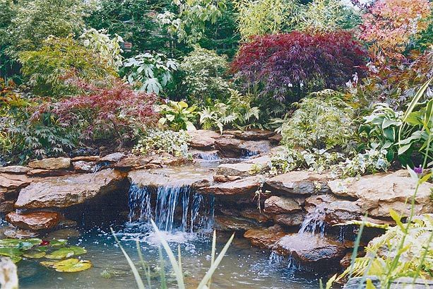 Image detail for paul dyer water features garden ponds for Natural garden pond design