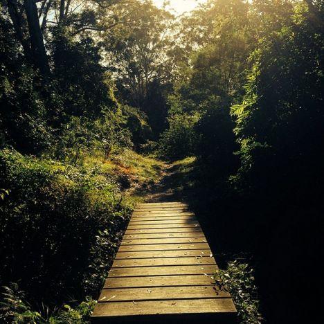 Lane Cove National Park Sunday morning hike
