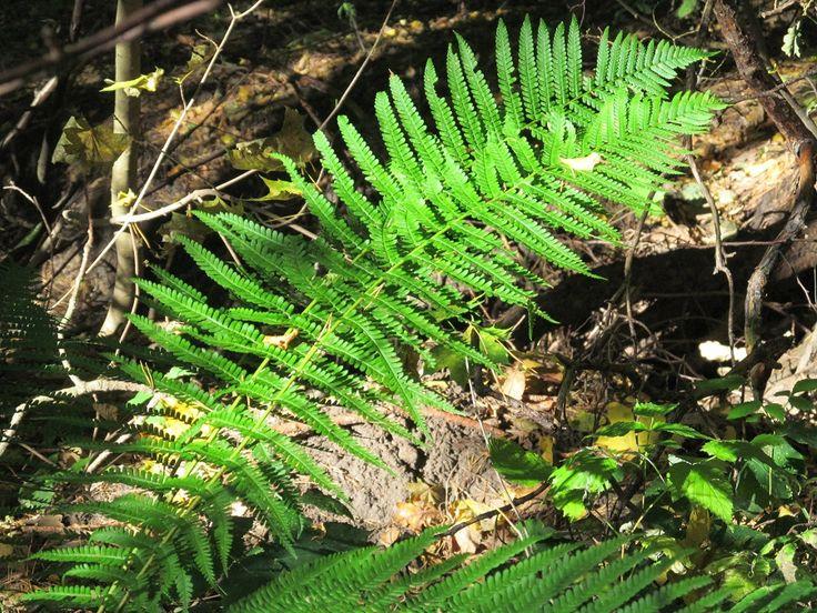 Przyroda na szlaku.  www.it.mragowo.pl