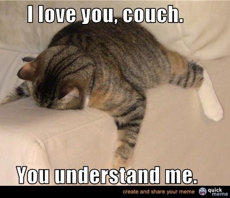 lolCouch, Funny Pictures, Funny Cat, True Love, Fat Cat, So True, Funny Animal, Kitty, Feelings