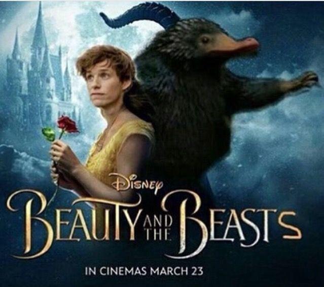 Imagines Newt Scamander X Reader Hold 13 Harry Potter Funny Newt Scamander Imagines Newt Scamander