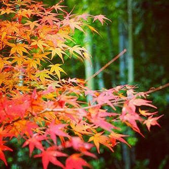 紅葉と竹林オレンジグリーン #嵐山 #紅葉 #竹林 #followme #sonyalpha #α7 #japan_of_insta #bestjapanpics #special_post #japanigram #japan_photo_now #lovers_amazing_group #photo_travelers #カメラ友達募集 #カメラ仲間募集 #写真好きな人と繋がりたい #写真撮ってる人と繋がりたい #カメラ好きな人と繋がりたい #写真好き #写真好きな人と繋がりたい #写真撮ってる人と繋がりたい #写真好き #lovers_nippon #bestjapanpics #special_post #Loves_nippon #japan_photo_now #art_of_japan #lovers_amazing_group #photo_jpn #pics_jp #jp_gallery #photo_travelers