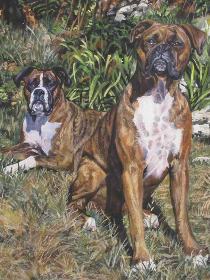 "brindle BOXER dog art canvas PRINT of LAShepard painting 12x16"" beautiful boxers by TheDogLover on Etsy https://www.etsy.com/listing/489553252/brindle-boxer-dog-art-canvas-print-of"