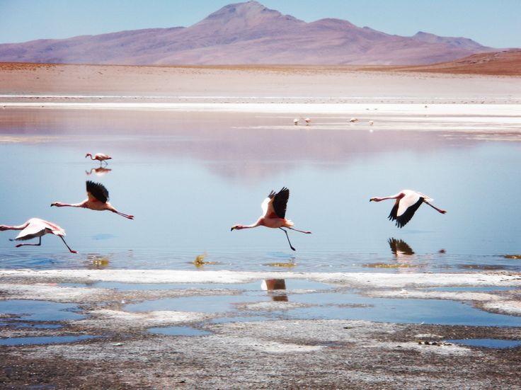 @enarasacha #bidaia #travelbolivia #lagunacolorada #flamingos #lakes #beautifullandscapes #viajesudamerica #backpacker #liveyourdreams #wanderlust #travellerwomen #bolivia
