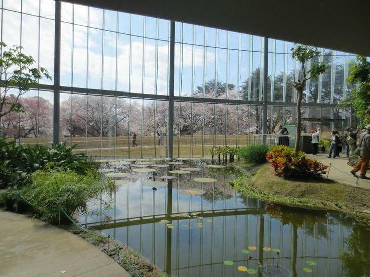 新宿都心からすぐの場所にある「新宿御苑」は、市民に広く開かれた都会のオアシスとなっています。2012年にリニューアルされたばかりの「新宿御苑大温室」は、熱帯の植物や珍しいラン、絶滅危惧種の植物などが鑑賞ができる隠れた穴場スポットです。そんな「新宿御苑大温室」の情報をお届けします!  1.新宿御苑大温室とは?...