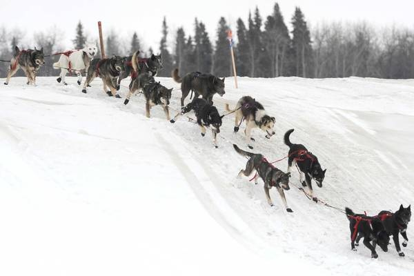 iditarod the test of endurance for man and beast Buy iditarod - the toughest race on earth ice road truckers & ax men comes iditarod test of animal and human teamwork and endurance - the iditarod trail sled.