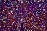 """New artwork for sale! - """" Peacock Philadelphia Zoo Iridescent  by PixBreak Art """" - http://ift.tt/2vIIhCs"""