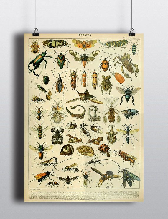 Antique Insects Science Chart Natural Science Bugs Wall Decor Wall Art  Scientific Beetle Entomology History Illustration. 17 Best ideas about Science Bedroom on Pinterest   Superhero room