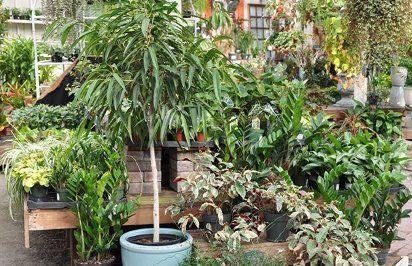 Януари е един от най-опасните месеци за стайните растения.