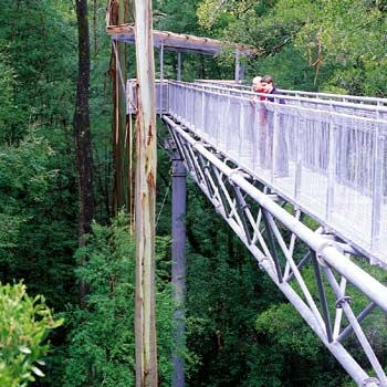 otway fly tree top adventures,