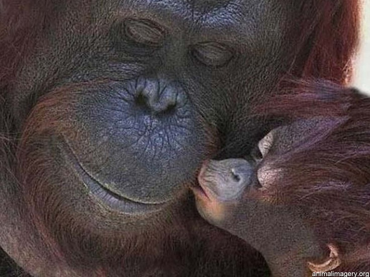 Cute Kiss | Cute Monkey Kiss | Animal Pictures