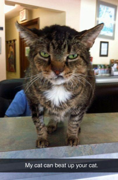 The tough cat. | 27 Cat Snapchats Guaranteed To Make You Laugh