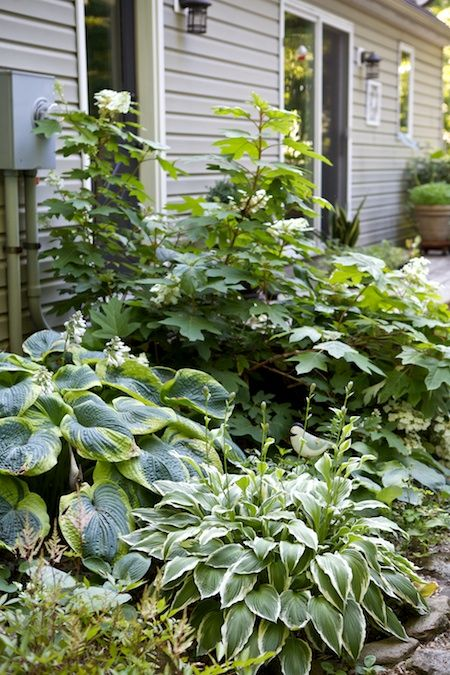Oakleaf hydrangea hostas and astilbe the gardens of for Can ornamental grasses grow in shade