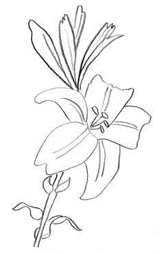 dessin de fleur de lys -http://www.image-gratuite.com/dessins-gratuits-fleurs/lys-dessin.html