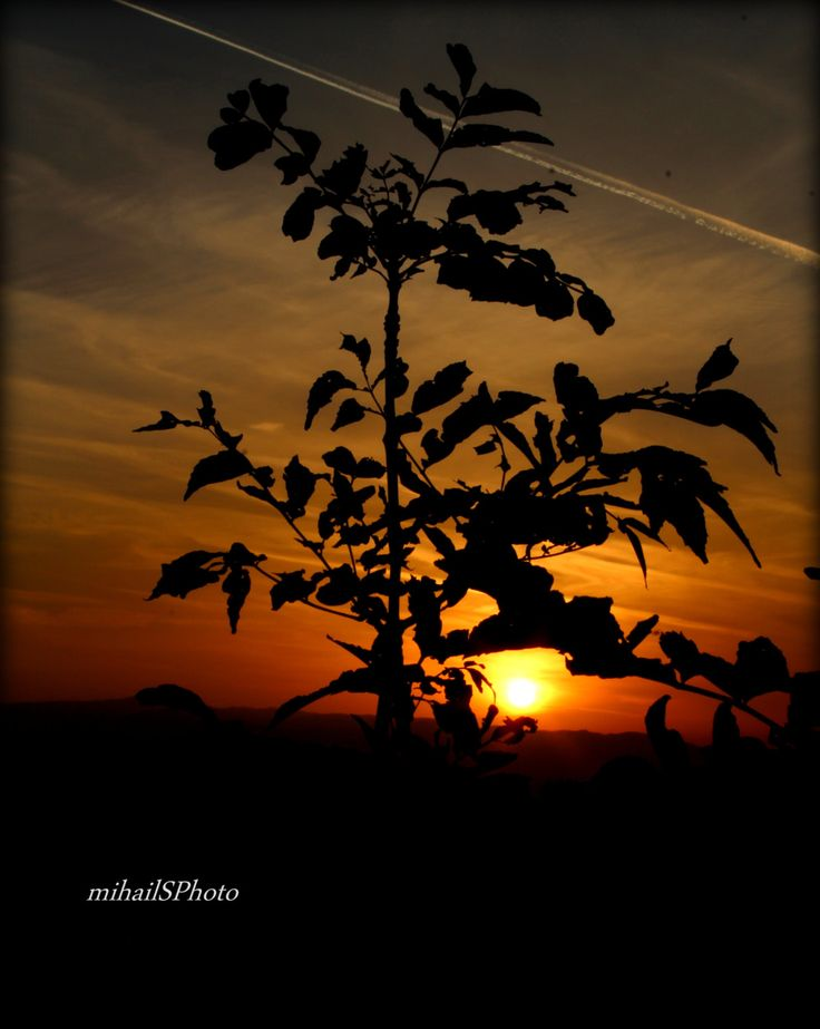 Autumn Sunset by msitarus on Etsy
