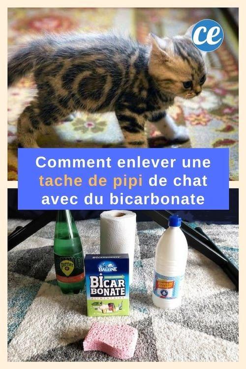Comment Faire Disparaître une Tache de Pipi de Chat Avec du Bicarbonate.