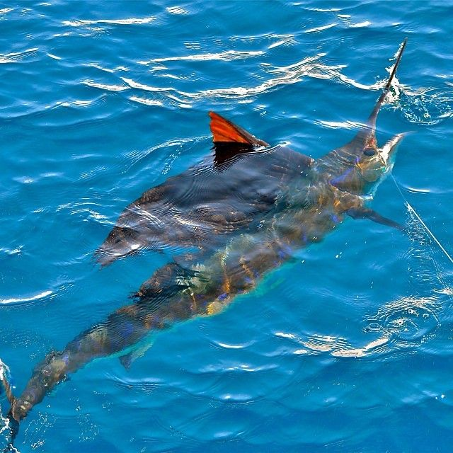 80 best images about game fishing on pinterest for Tuna fishing games
