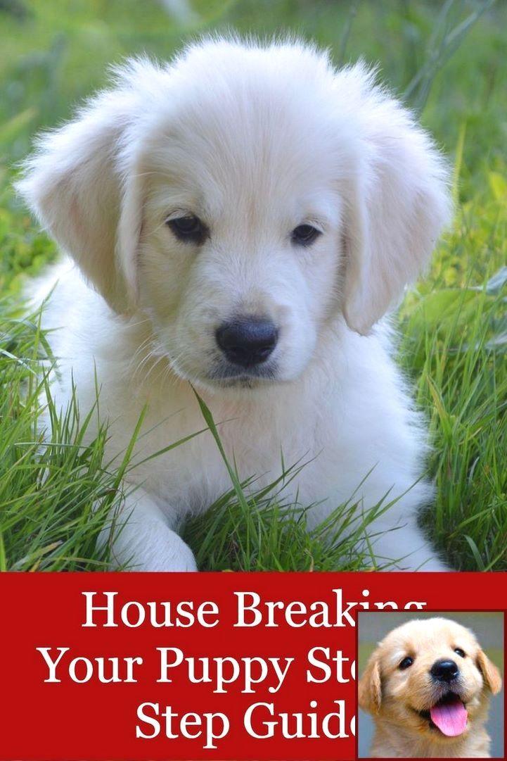 Dog Behavior Running In Circles And Dog Training Courses In Chennai Puppy Training House Training Puppies Dog Biting Training
