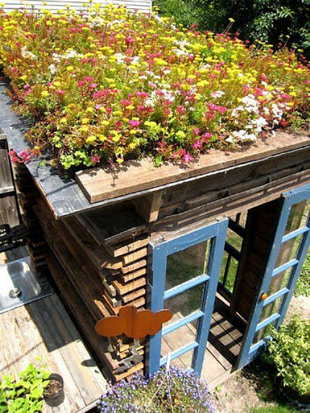 Green roof on Shed. By landscape architect Joy Kuebler. All materials used to build the shed came from Buffalo ReUse. www.buffalorising.com