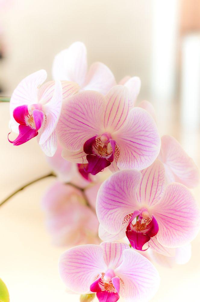 орхидеи фото на телефон можете