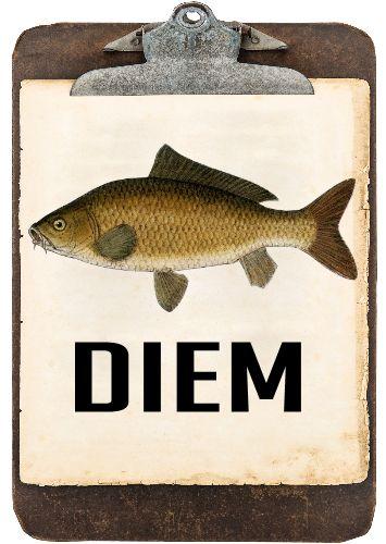 T-shirt humour Latin :   ►►CARPE DIEM N'en déplaise à Najat Vallaud-Belkacem, voici une Locution Latine extraite d'un poème de Horace que l'on traduit en français par : « Cueille le jour présent sans te soucier du lendemain »