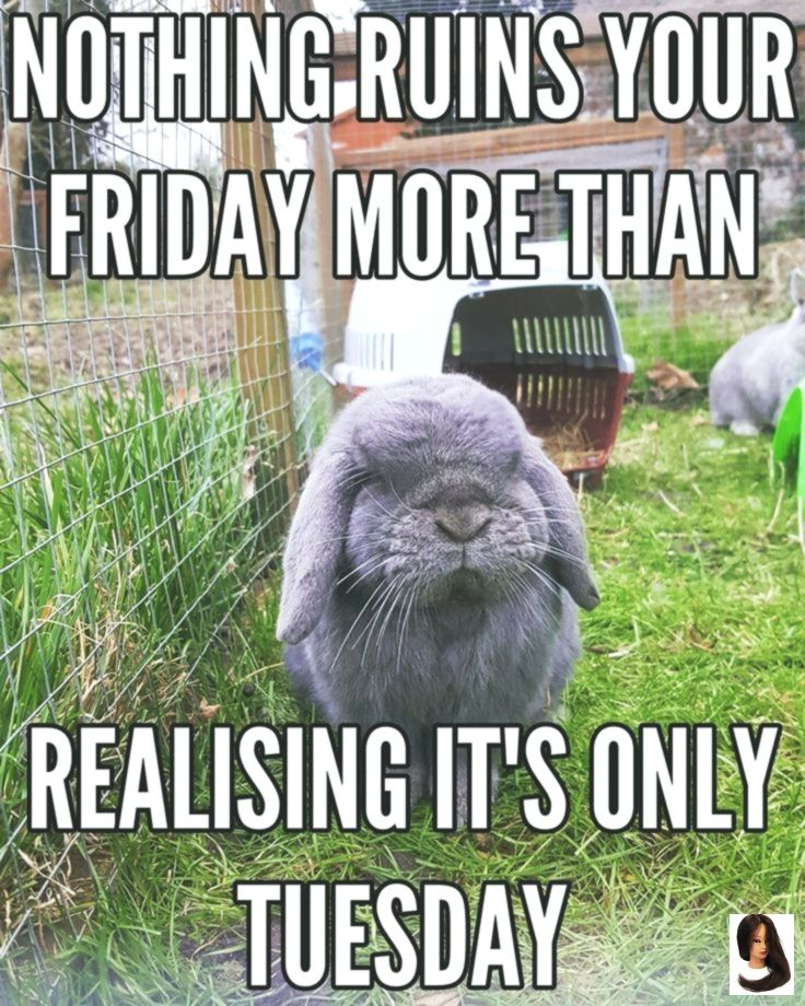 Animal Animal Meme Inspirational Memes Ready Weekend 40 Animal Memes To Get You Ready For The Weekend Funny Tuesday Meme Tuesday Meme Funny Animal Memes