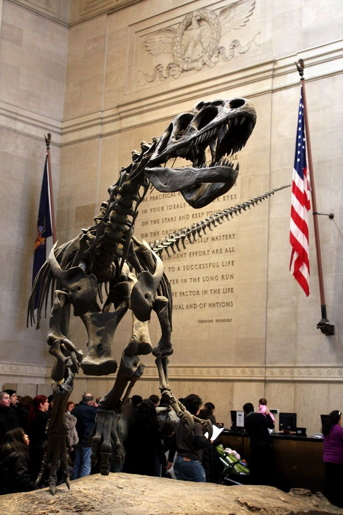 The American Museum of Natural History:  impressive dinosaur skeletons, a life-size model of a blue whale hanging from the ceiling and much more, New York City, New York, USA