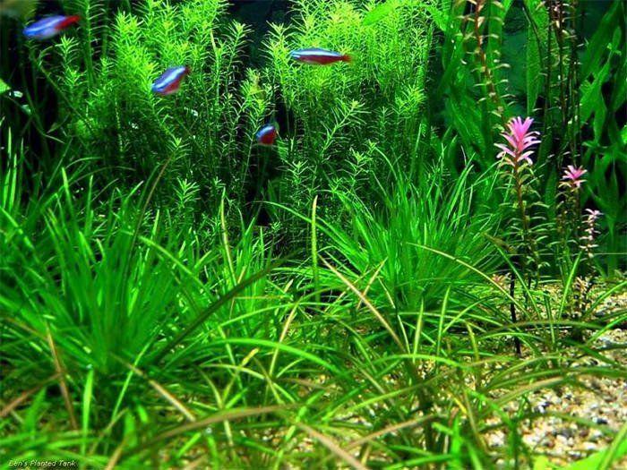Fish Tank Background Printable 50 Best Aquarium Backgrounds In 2020 Aquarium Backgrounds Background Background Pictures