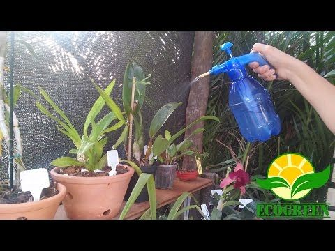 Como Adubar Orquídea / Orchids - How to Fertilize. - YouTube