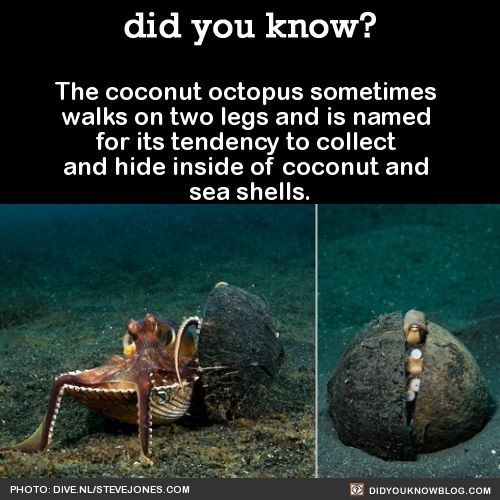 Yet another way to die from coconuts, the list seems endless