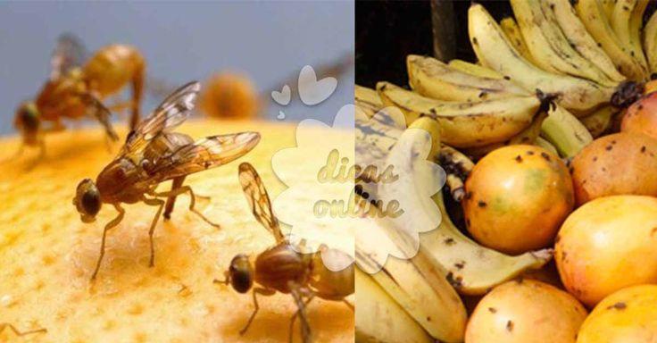 Fantástico! Moscas da fruta: um drama de verão com solução! - # #fruta #moscas