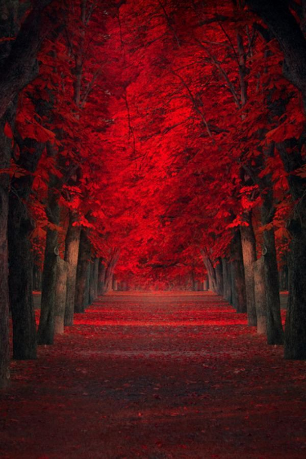 Red tree line