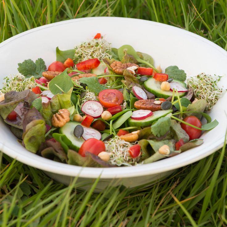 Salade de chêne rouge, à la noix, au radis et au concombre / Red Oak Leaves salad, with nut, radish and cucumber