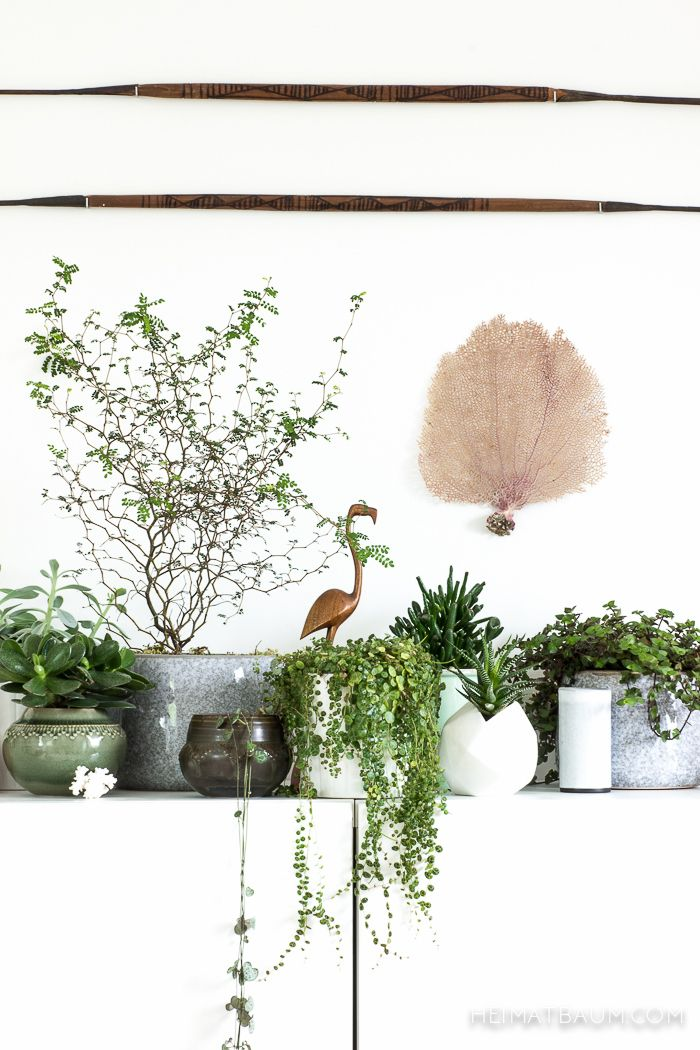 Urban Jungle Bloggers: My Plant Gang by @heimatbaumcom