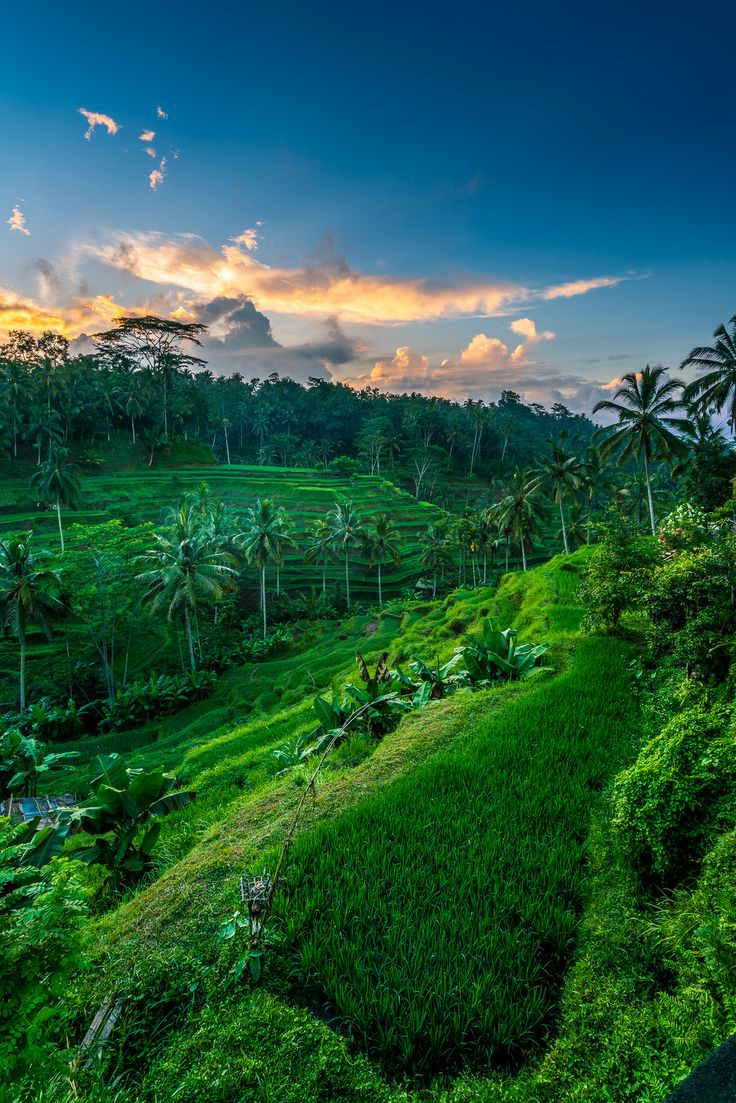 https://flic.kr/p/GsHG9j   Sunrise @ Rice Terrace - Bali Indonesia     Sony a7R II + 16-35 and Lee Little stopper - Lee landscape polarizer   Workshops fotografie in the Netherlands and Indonesia @  Wagner.Photography     Thanks for you faves, notes or comments (in any language), I appreciate it No self Promoting comments. ;-)   Do not use my photos on websites, blogs or other media without my permission. All rights reserved © Daan Wagner.