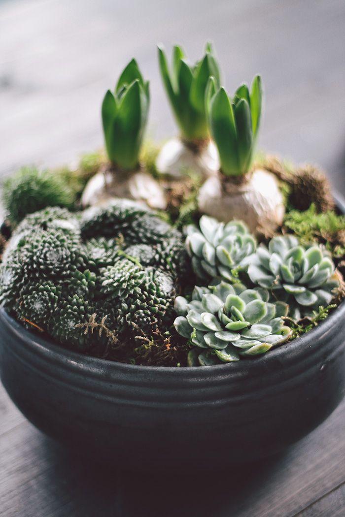 bulbs and cacti