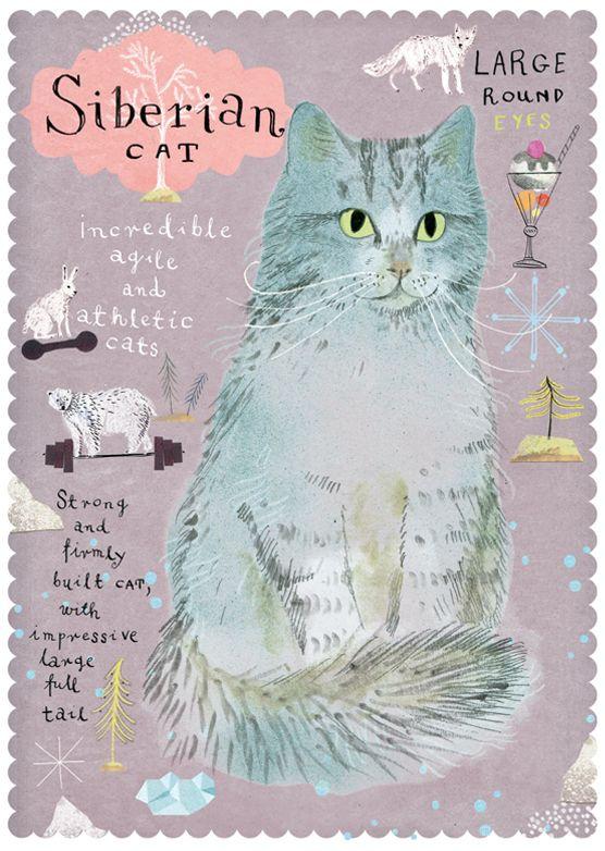 Postallove - Siberian cat