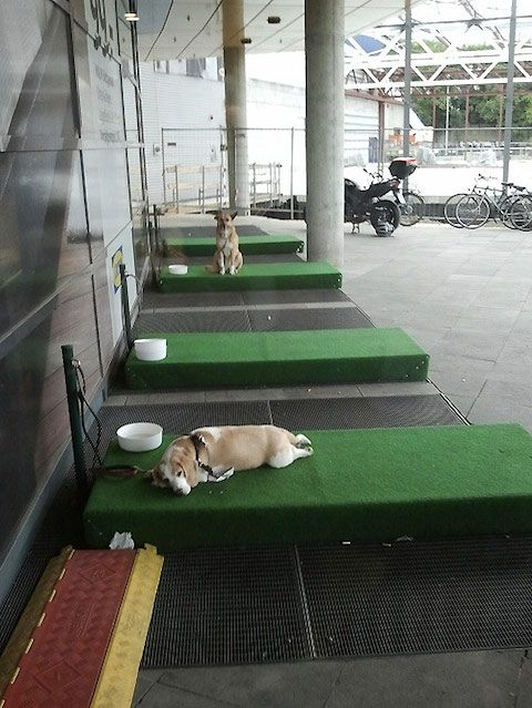 Barking lots … erm, we mean parking lots, for dogs? They now exist in Germany's IKEA outlets as rectangular astro-turf lawns set aside for dog owners to park their dogs while they shop. Looks rather cosy, too.