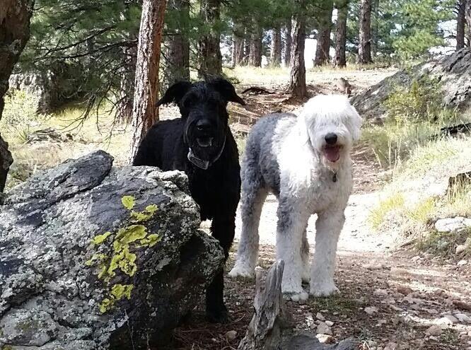 World Explorers: Cloverton The Deaf Dog
