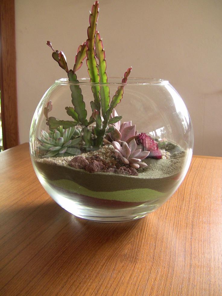 17 best images about succulents on pinterest succulent bowls terrarium and shells. Black Bedroom Furniture Sets. Home Design Ideas