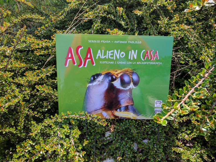 Un viaggio per piccoli esploratori alla scoperta dei ragni saltatori e del loro mondo affascinante, immortalato nelle macrofotografie di Sergio Frada. Un'opportunità per scoprire l'universo di questi straordinari predatori, capaci di incantare non solo per i loro bellissimi colori ma anche per le capacità da veri supereroi come la vista a 360° e gli incredibili balzi. #ragni #libri #bambini #libriperbambinisuiragni #insetti #edizioniDBS #macrofotografie