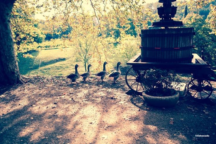 Basse Cour du Château Fontainebleau du Var. Courtyard of the Fontainebleau Castle in Provence #Duck #canard #vineyard ©Sebanado http://sebanado.fr