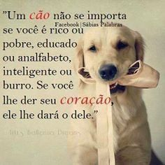 AMOR PURO! ❤ #filhode4patas #maedecachorro #paidecachorro #cachorro #cachorro étudodebom #cachorroterapia #caopanheiro #labrador #golden #schnauzer #pug #maltes #yorkshire #shihtzu #luludapomerania #viralata #bulldogfrances #petmeupet #petshop